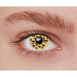 Lentilles leopard