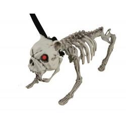 Chien squelette